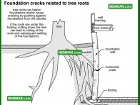 0253 Foundation Cracks Related to Tree Roots - Structure Structural Foundation